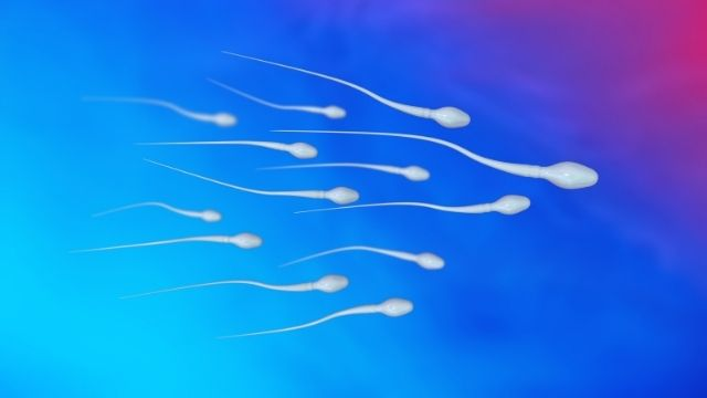 All About Azoospermia And Its Treatment | Shree IVF Clinic - Dr. Jay Mehta